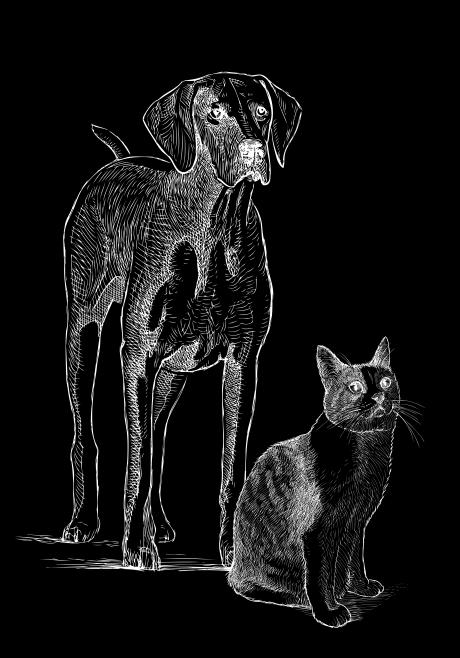 Šuo ir katė | Bachus