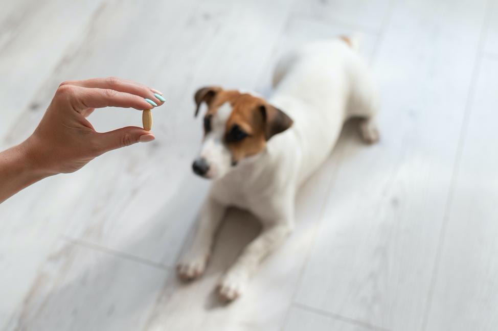 Papildai šunims: kada būtini papildai sąnariams ir kaip pasirinkti tinkamiausius | Bachus